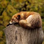 Entspannung in den Alltag integrieren