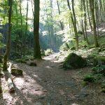 Wanderung durch das Ilsetal (HSP on tour)