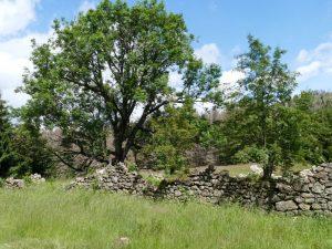 Ruine des Viehhofs