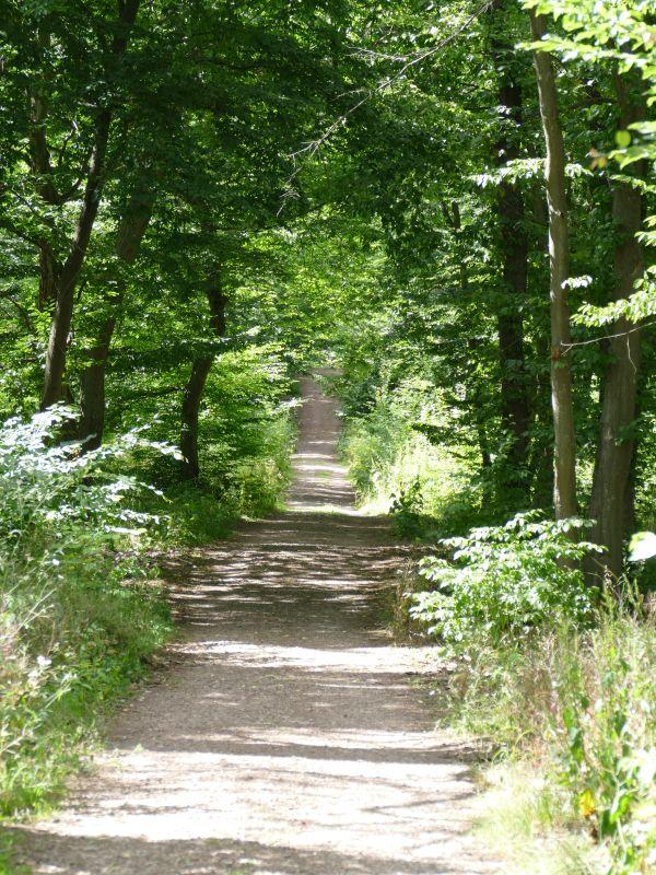 Weg zur Stempelstelle Weißer Hirsch