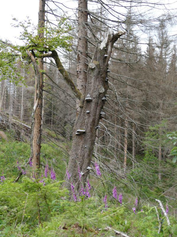 Dammgrabenweg - Charakterbaum
