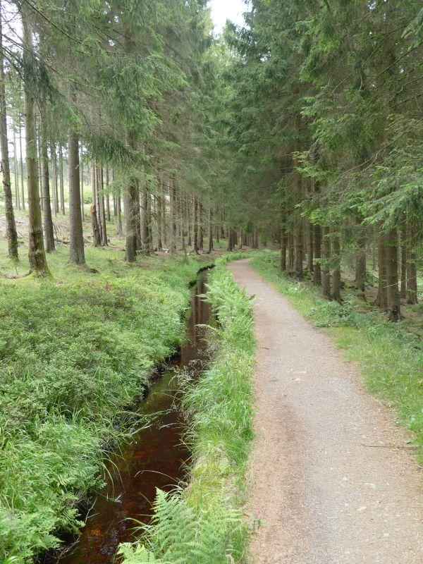 Dammgrabenweg - Waldweg