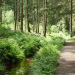 Wanderung am Dammgrabenweg (HSP on tour)