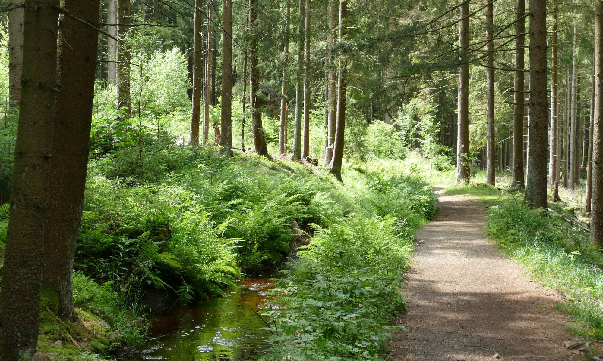 Dammgrabenweg