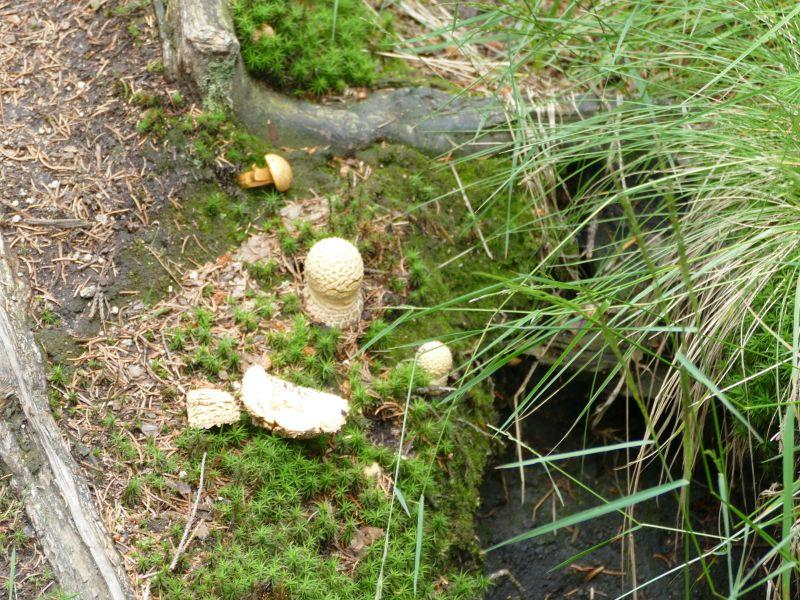Märchenweg - Pilze