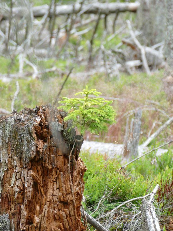 Märchenweg - Baum