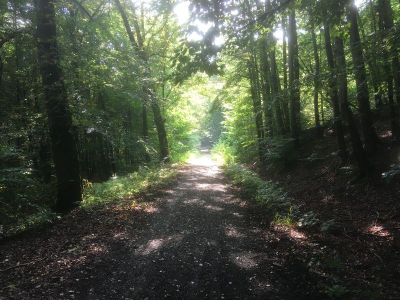 Wanderung zum Volkmarskeller - Waldweg